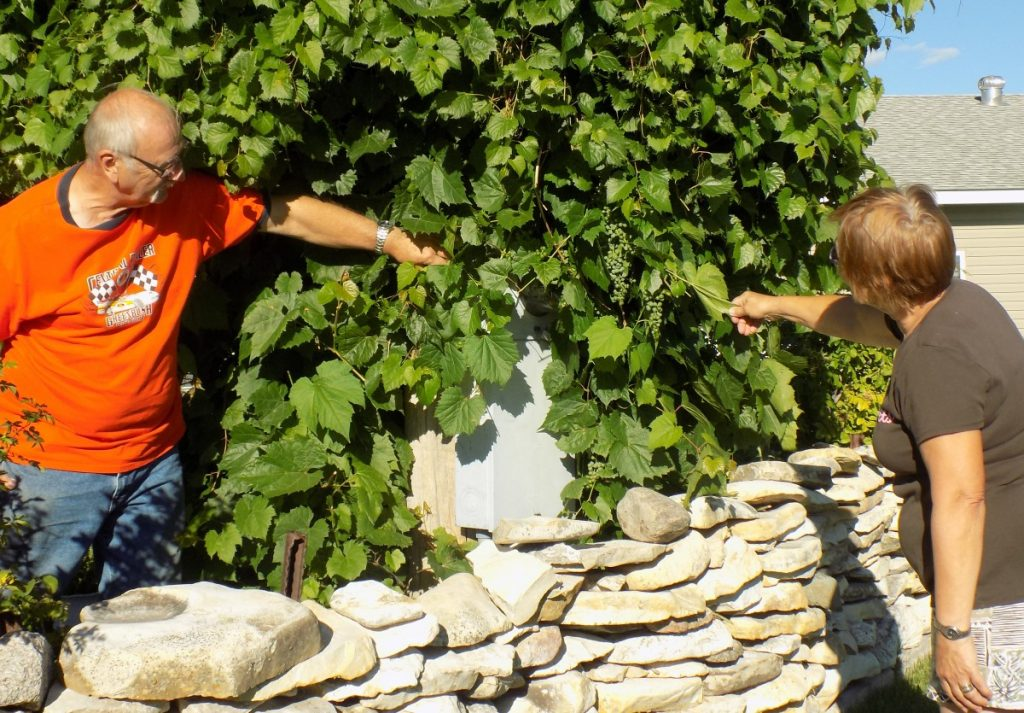 David and Deb Dokken point out the wild grapes that are growing in their Memorial garden. The garden also includes a different rose that has been planted in memory of each of their loved ones who has passed on. (photo by Mavis Gonshorowski)