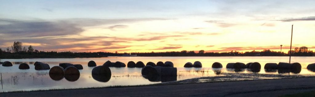 Countless round bales of hay, each weighing approximately 1500 pounds, lie in a vast bed of water near Badger. (photo by Lori Foldesi)